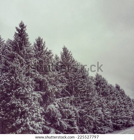 Tall pine trees covered in snow line the forest. - stock photo