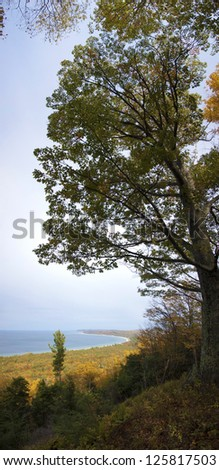 Tall tree overhanging autumnal forest background and lake - stock photo