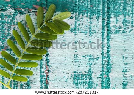 tamarind leaf on grunge colorful wooden panel - stock photo
