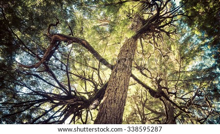 Tangled branches of a western hemlock in a forest in Southeast Alaska. - stock photo