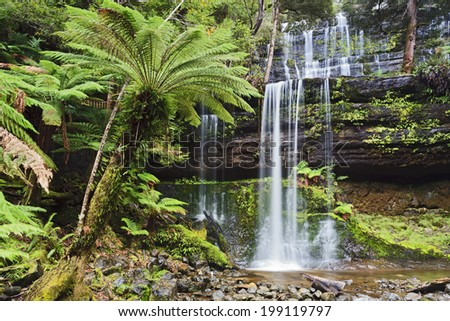 Tasmania Mt Field national park waterfall cascade in lush rainforest front view wet clear pure forest stream - stock photo