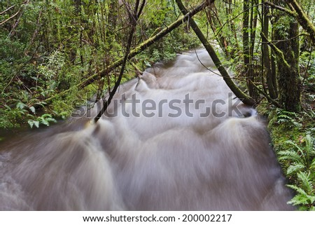 Tasmania natural rainforest overflown flood rain full of water in national park during heavy rains blurred stream - stock photo