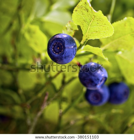Tasty and healthy blueberries - stock photo