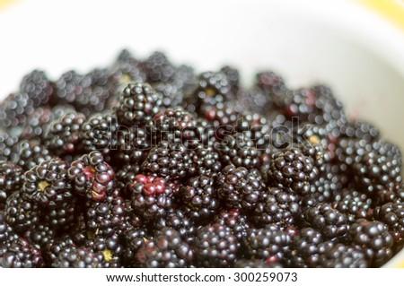 Tasty blackberries in a white bowl - stock photo