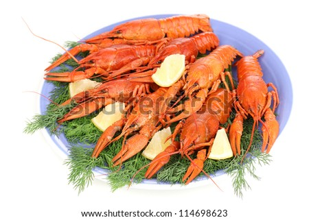 Tasty boiled crayfishes with fennel on plate isolated on white - stock photo