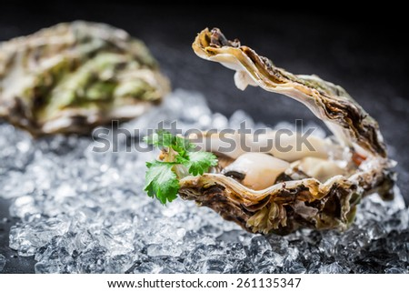Tasty oyster in shell on black rock - stock photo