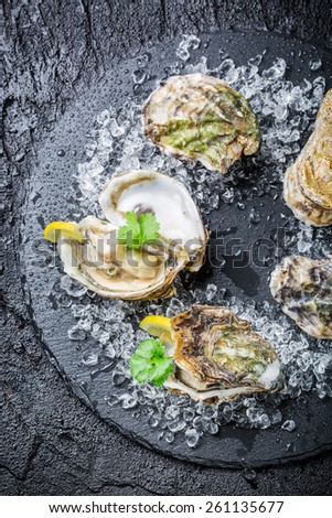 Tasty oysters on ice ready to eat - stock photo