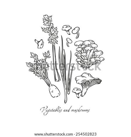 Tasty vegetables set - mushrooms, chanterelles, butter mushrooms, celery, celery root. Vegetarian concept collection - stock photo