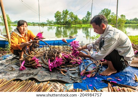 TAY NINH, VIETNAM- JULY 14: the farmers sorting and cleaning the water lily flowers in Tay Ninh, Vietnam on July 14, 2014. This flower is used as vegetables. Tay Ninh is province of south Vietnam. - stock photo