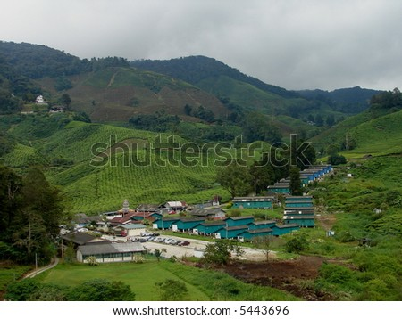 Tea farm in Asia - stock photo
