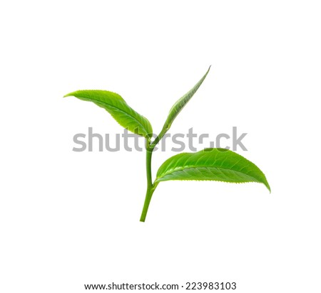 tea leaf isolated on white background - stock photo