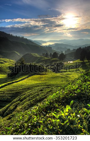Tea plantation at the Cameron Highland, Malaysia  - stock photo