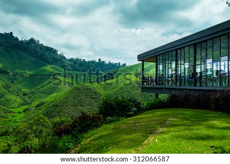 Tea Plantation - Cameron Highland, Malaysia - stock photo