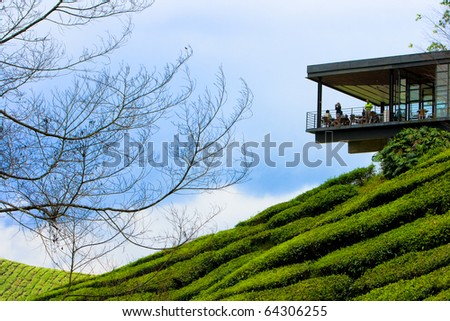 Tea plantation in cameron highland in Malaysia. - stock photo