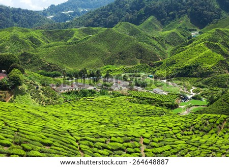 Tea plantation in the mountains of Cameron Highlands, Malaysia - stock photo
