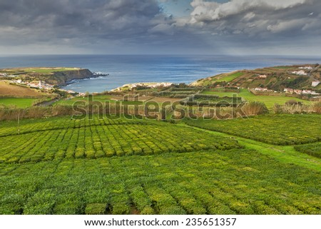 Tea plantation of factory Cha Porto Formoso. Azores, Portugal - stock photo
