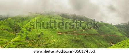 Tea plantations near Nuwara Eliya. Sri Lanka. Panorama - stock photo