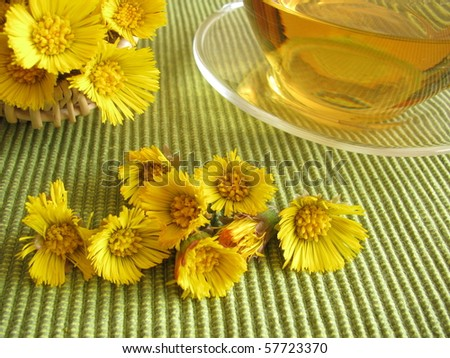 Tea with coltsfoot - stock photo