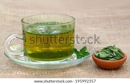 Tea with Green and dired Stevia leaves - stock photo