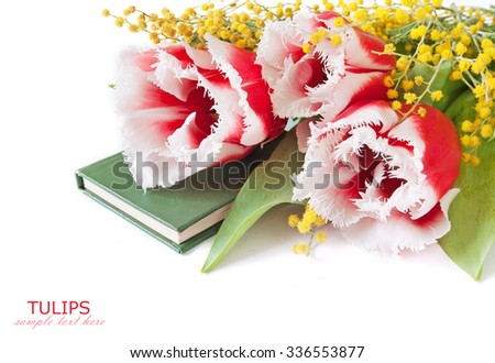 Teacher Day (tulips and mimosa beautiful flowers bunch and book isolated on white background with sample text) - stock photo