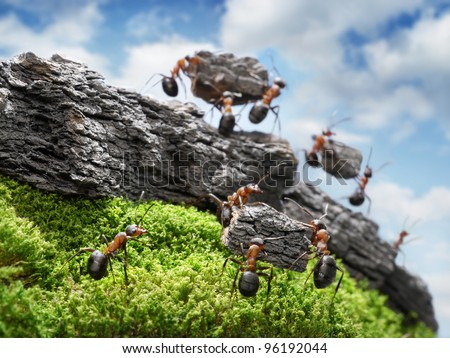 team of ants constructing Great Wall, teamwork concept, focused on nearest block - stock photo