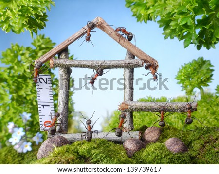 team of ants constructing wooden house in forest, teamwork, ant tales - stock photo