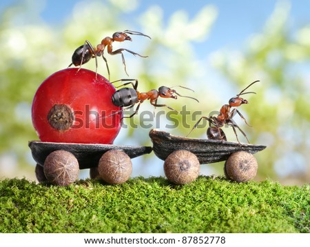 team of ants delivers red currant with trailer of sunflower seeds, teamwotk - stock photo