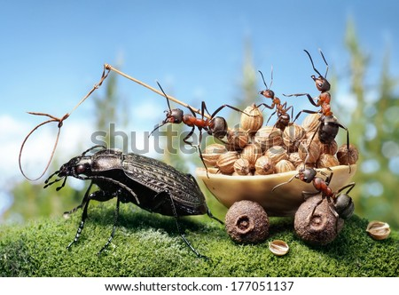 team of ants harnessing the bug, ant tales - stock photo