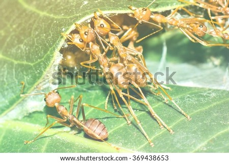 Team of red ants building nest with filter effect - stock photo
