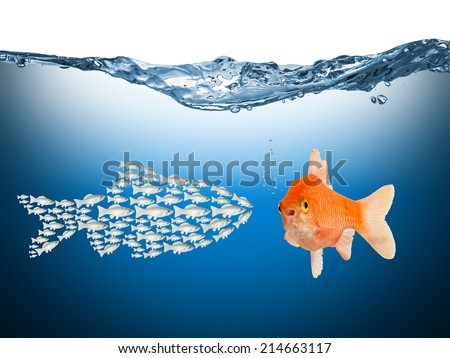 teamwork concept with fishes - stock photo