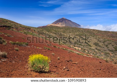 Teide volcano with yellow lavender flowers in the foreground, Tenerife, Canary Islands, Spain - stock photo