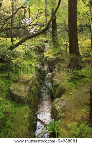 Temperate forests - stock photo