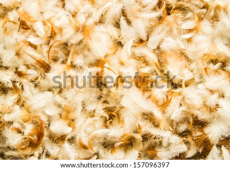 Tender chicken feathers close up background. - stock photo