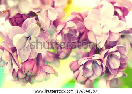 tender lilac flowers close up - stock photo