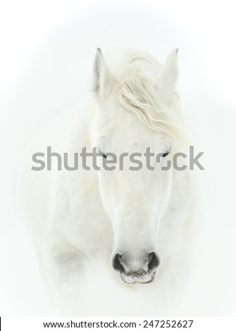 tender portrait of white horse head close up - stock photo