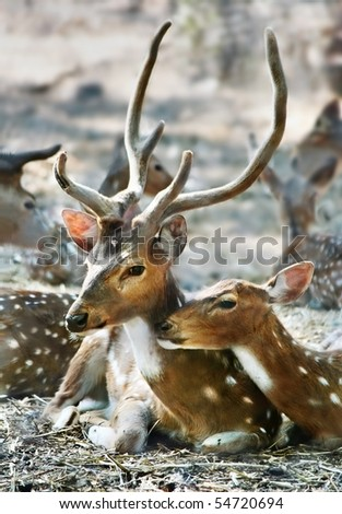 Tenderness in the family of deer - stock photo