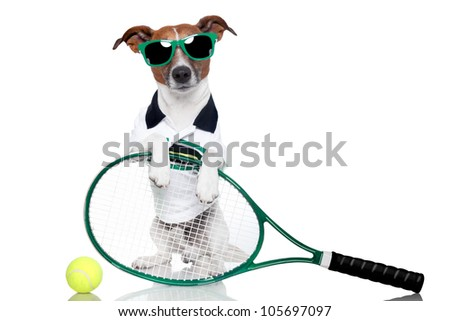 tennis dog with racket and glasses - stock photo