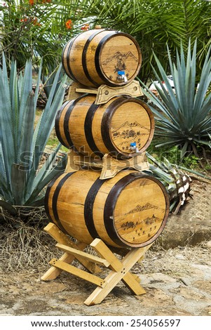 Tequila barrels stacked on agave lanscape. - stock photo