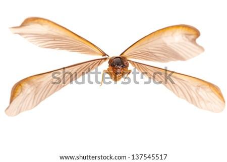 termite - stock photo