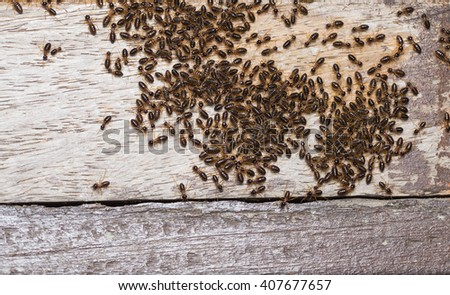 termite group are eating and marching on wood - stock photo