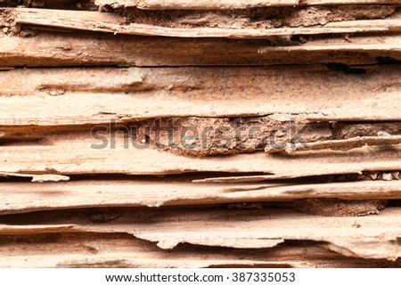 termite infested wood close up. - stock photo
