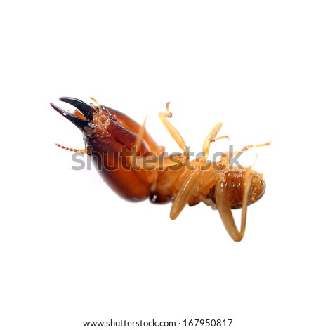 Termites eating the house isolated on white background - stock photo