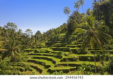 Terrace rice fields in the afternoon, Bali, Indonesia  - stock photo