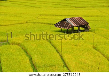 Terrace Rice fields, Northern of Thailand - stock photo
