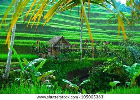 Terrace rice fields on Bali, Indonesia. - stock photo