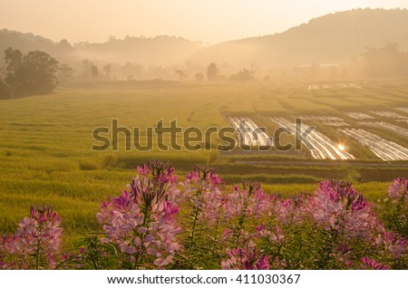 Terraced Rice Field in the morning , Mae Kalng Luang , Chiang Mai , Thailand  - stock photo
