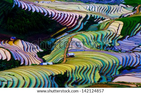 Terraced rice field in Vietnam - stock photo