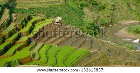 Terraced rice field in water season in Mucangchai, Vietnam - stock photo