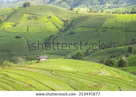 Terraced rice fields in northern Thailand - stock photo