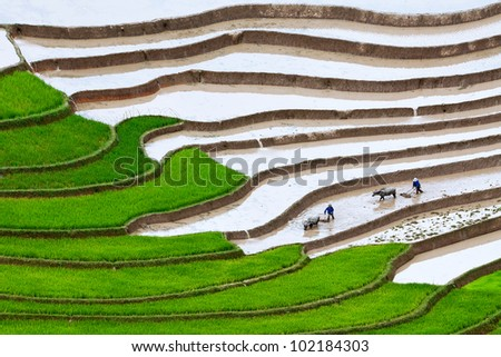 terraced rice fields. Two farmers at work, the old fashion way, plowing the land with buffalo (Mu Cang Chai, Yen Bai, Vietnam) - stock photo